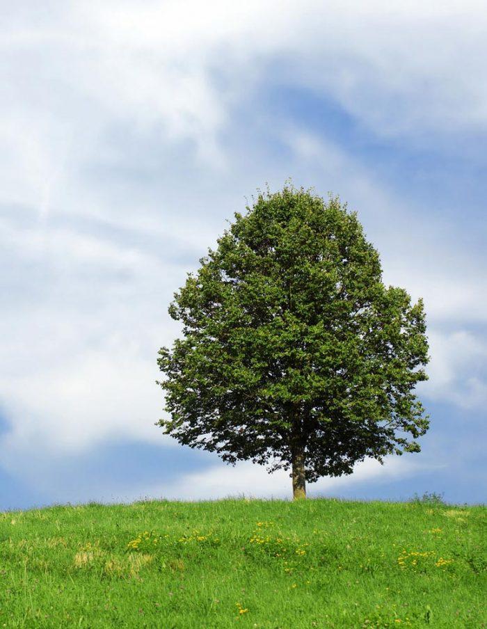 tree-106096web1