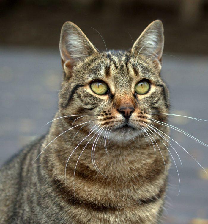 cat-3771744web