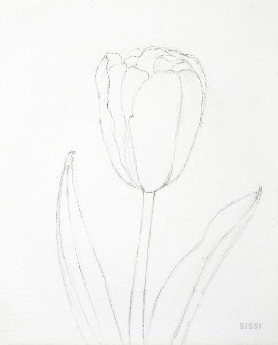 tulip1web