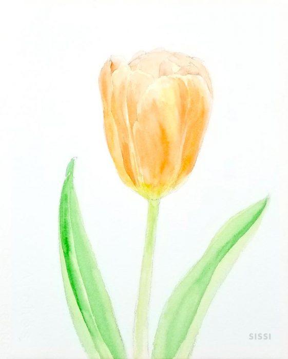 tulip4web