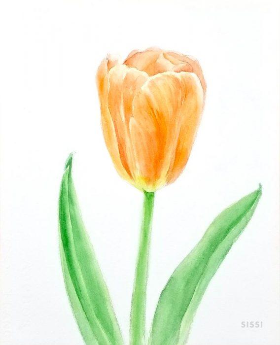 tulip5web
