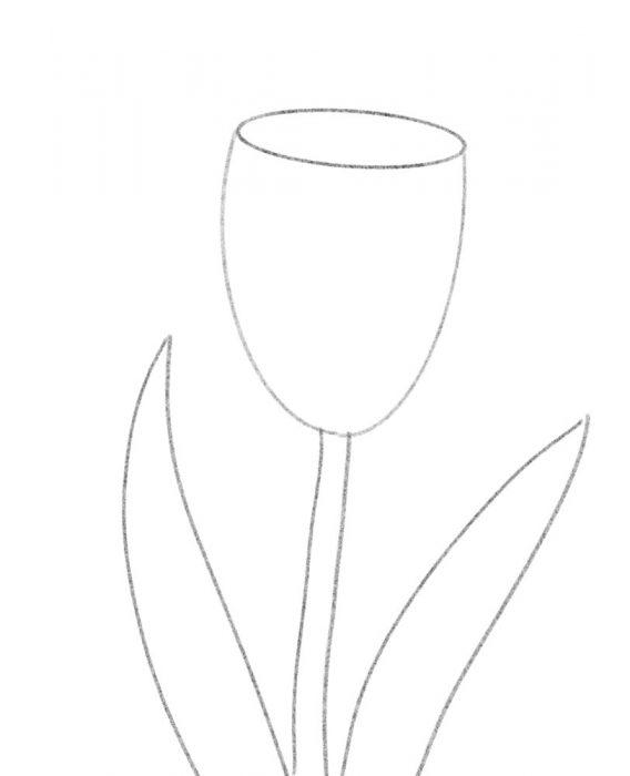 tulip_1web